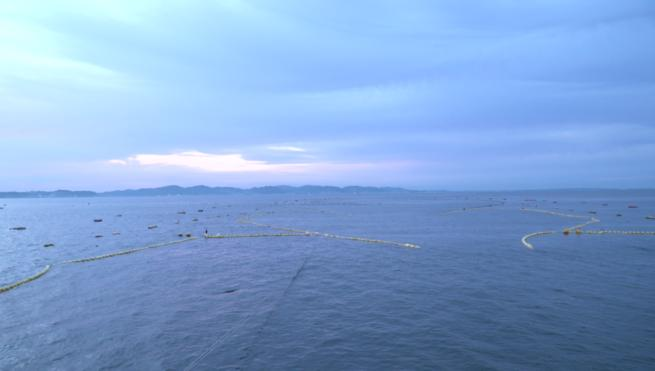 江ノ島定置網
