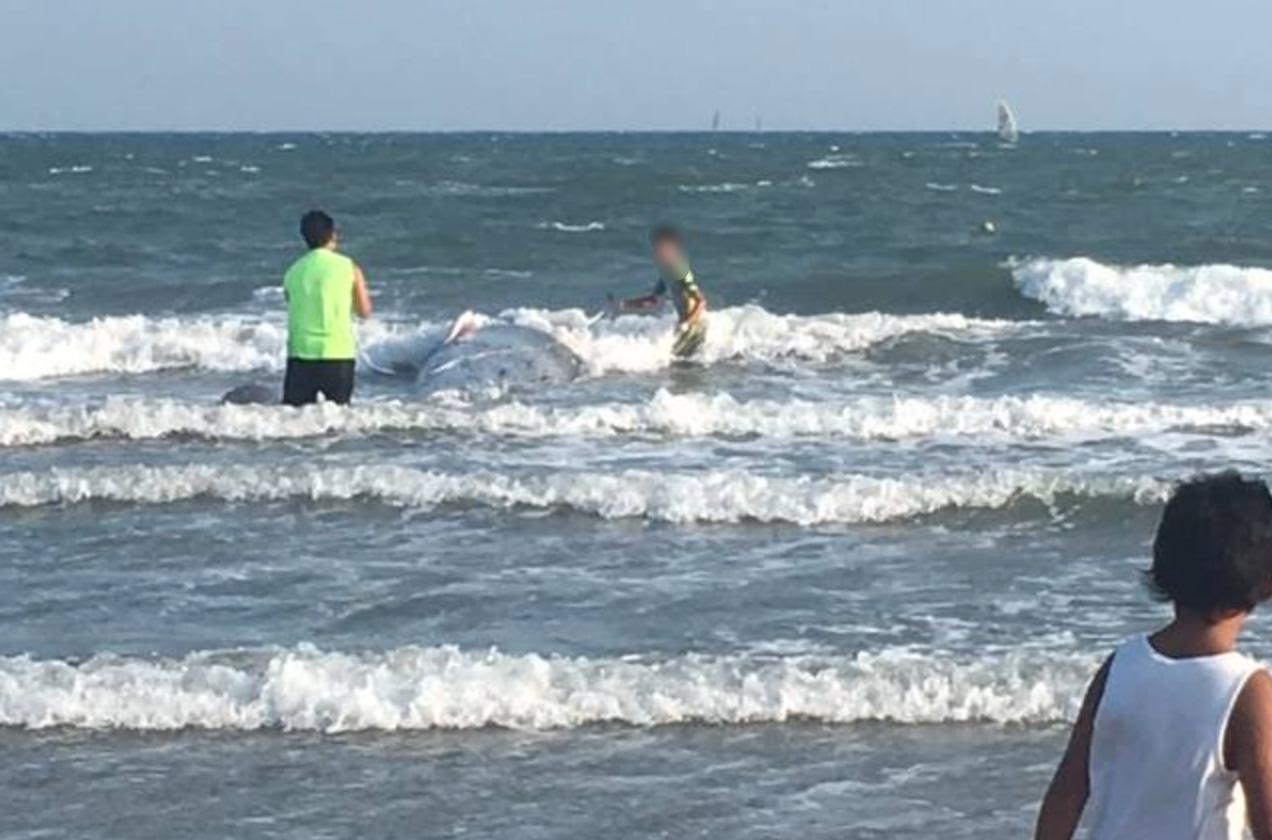 由比ヶ浜のクジラ